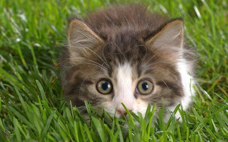 Perché I Gatti Si Fanno Di Erba E Noi Siamo Pazzi Di Loro Animalier