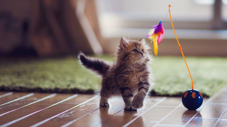 Giocare Online Con I Gatti Del Gattile Animalier