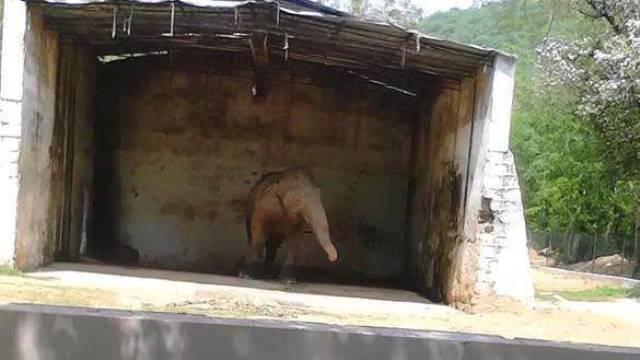 animalier-magazine-petizione-elefante-kaavan