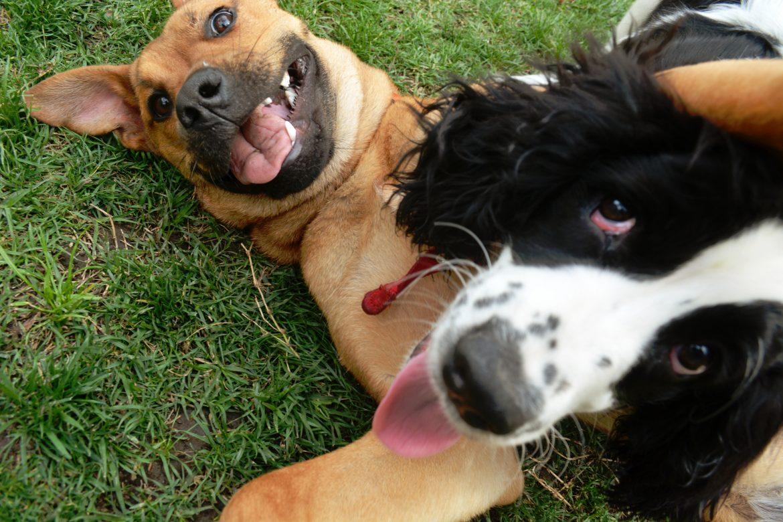 contagio-emotivo-cani-provano-empatia