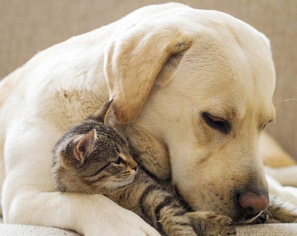 riforma-animali-non-pignorabili