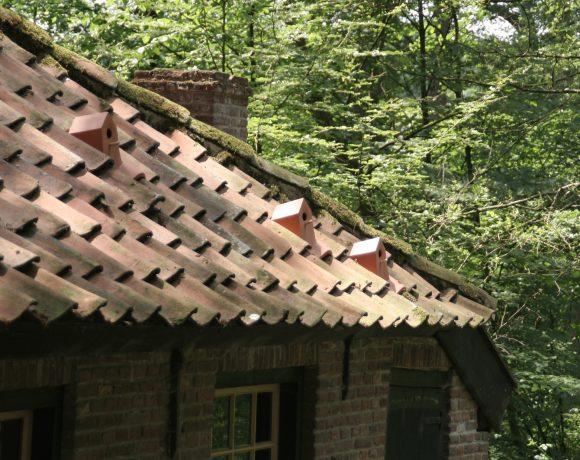 bird-house-tegola-uccellini