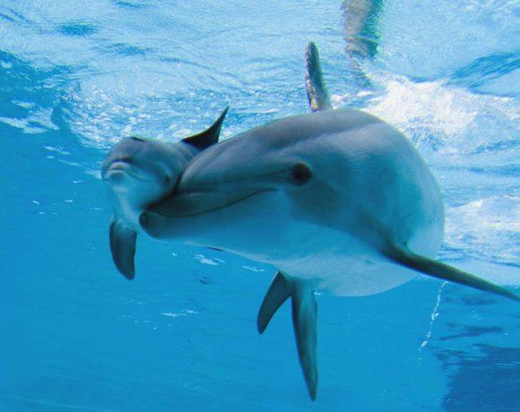 delfino-spiaggiato-cerveteri-lazio