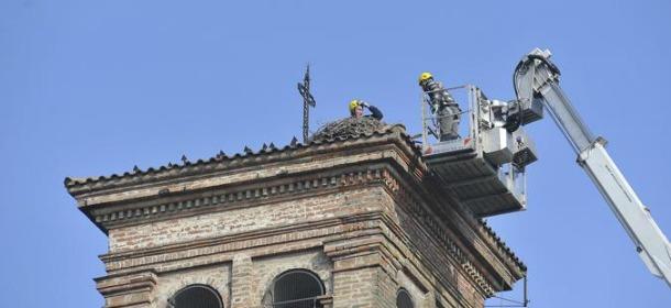 lodi-cicogne-scacciate-campanile