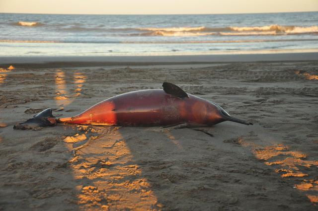 morti-23-delfini-argentina