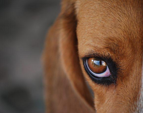 orientamento-cane-vista