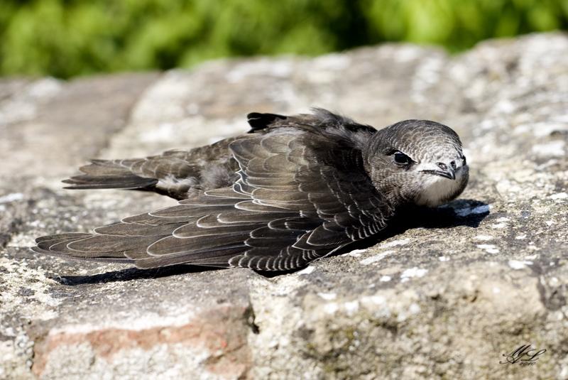uccellini-raccolti-terra