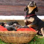 lilica-fotografata-cuccioli