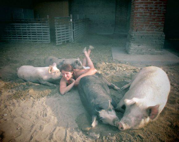 piccola-fattoria-animali-maiali-macello