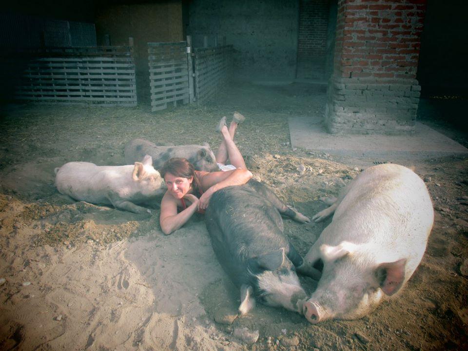 la piccola fattoria degli animali salva i maiali dal