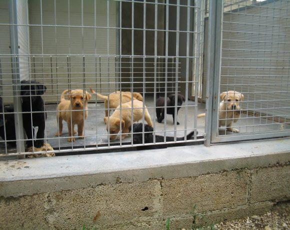 detrazione-fiscale-adozione-cane