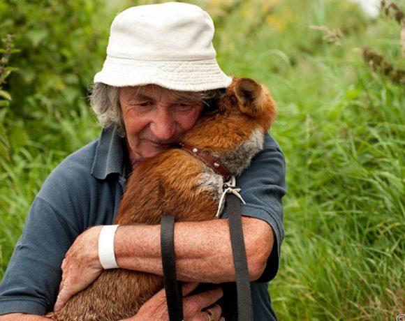 irlanda-mr-fox