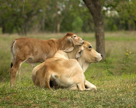 lussemburgo-proposta-legge-dignita-animale