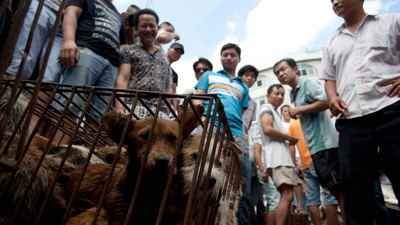 yulin-festival-protesta-animalisti-italiani