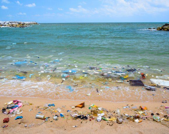 greenpeace-plastica-dentro-pesci
