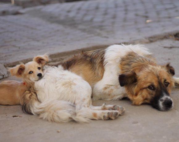 tassa-cani-non-sterilizzati-emendamento-pd