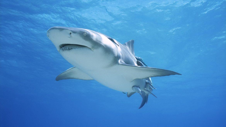 shark-attack-bethany-hamilton