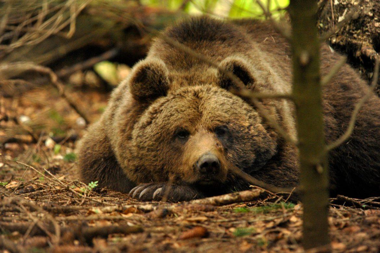 trentino uomo aggredisce orso