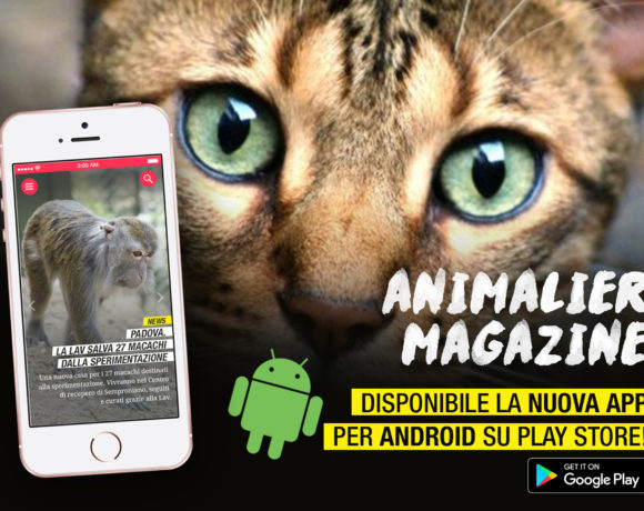 animalier_app_android